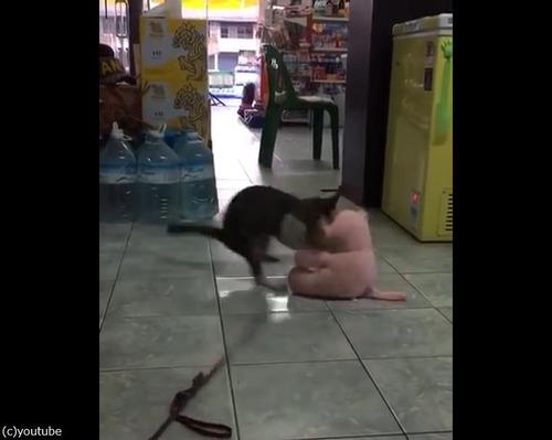 ぬいぐるみVS猫01