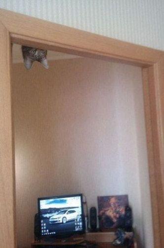 猫は見ている14