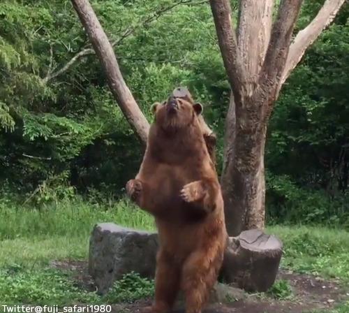 ダンスするクマがかわいい03
