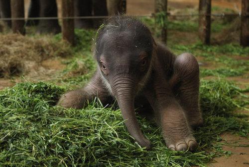 動物の赤ちゃん30