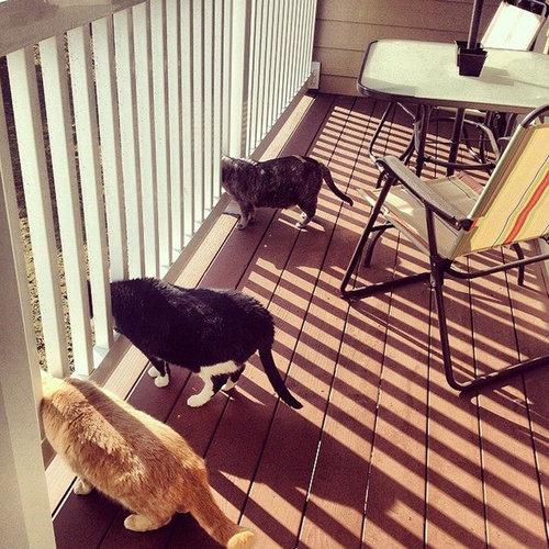密談する猫たち07