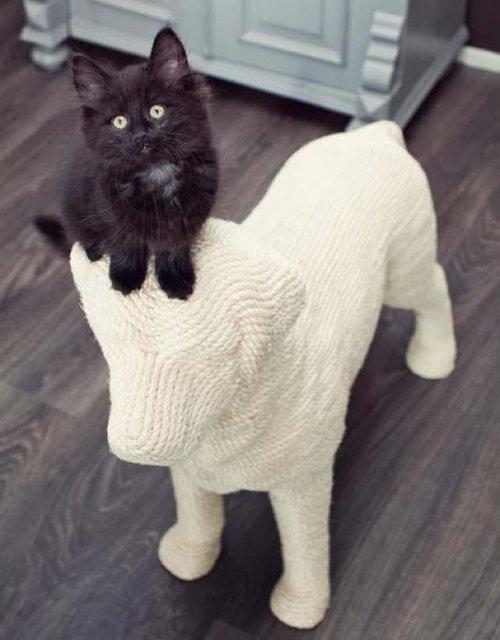 猫のツメとぎを犬の形に09