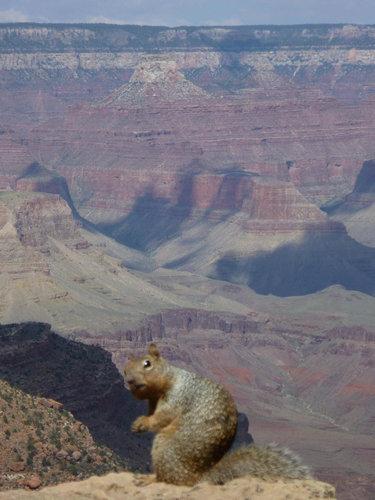 13見たな…とバレた感ある動物たち