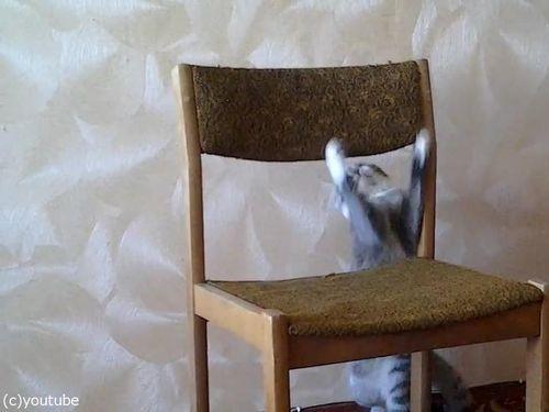 猫がイスでアクロバティック05