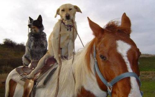 馬に騎乗する犬06