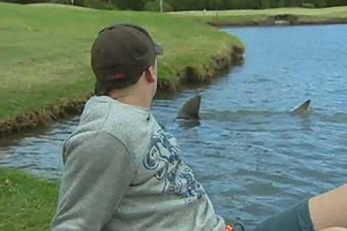 ゴルフ場にサメ00