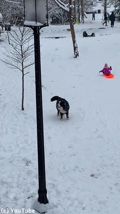 雪を愛してやまないワンちゃん04