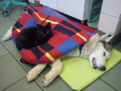 看護猫04