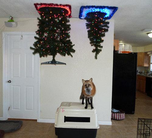 ペットからクリスマスツリーを守る戦い01