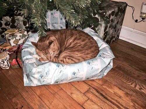 クリスマスに何がもらえるか01