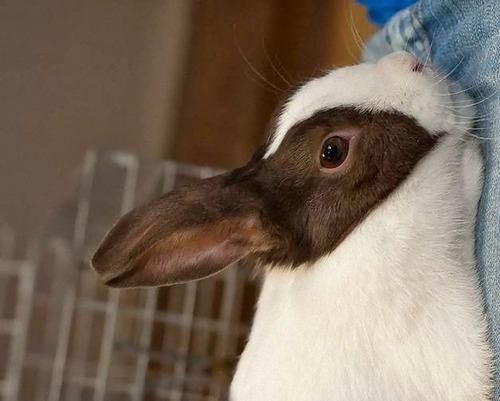 ウサギとアヒルのだまし絵01