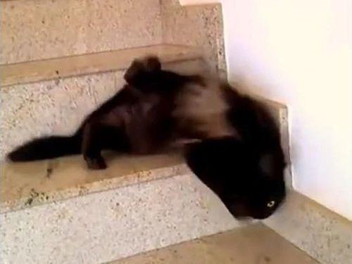 液体みたいな猫06