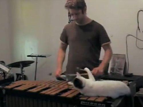 木琴の邪魔をする猫01