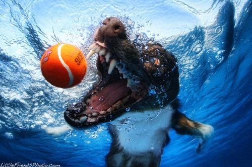 水中の犬06