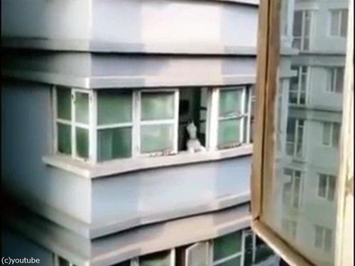 向かいの犬を呼ぶ方法05