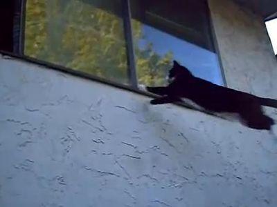 意志があればなんとかなるという猫