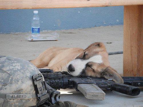 子犬はどこでも寝れる11