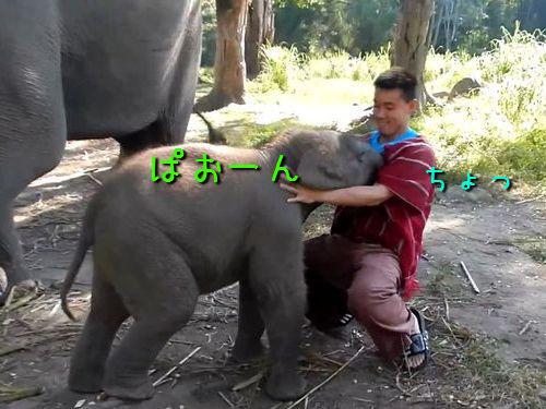 赤ちゃんゾウ00