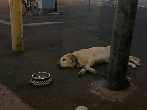 飼い主を待つ犬たち06