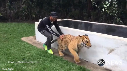 虎を背後から脅かすと02