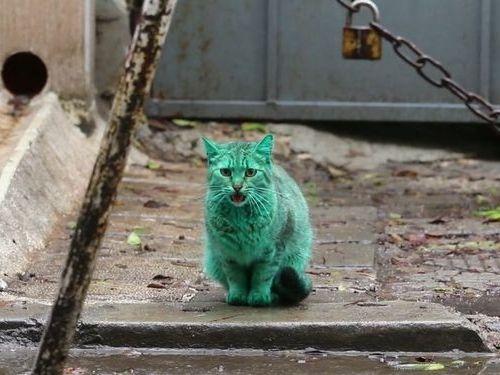 エメラルドグリーン色の猫02