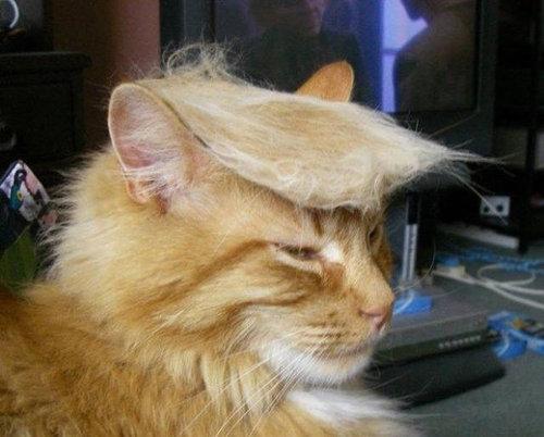 ブラッシングした猫の抜け毛をかつらに01