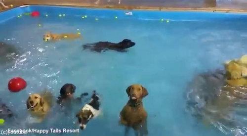カメラ目線の犬04
