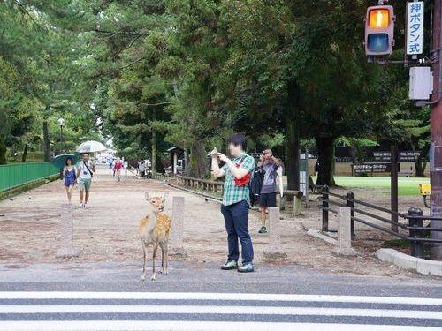 奈良の鹿と外国人02