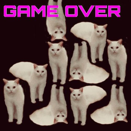 溶けてる猫14