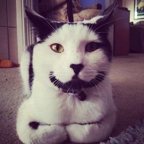 ハッピー猫09