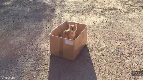 猫にダンボール06