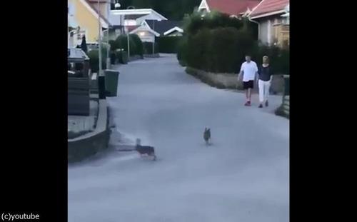 ウサギのストリートファイト03
