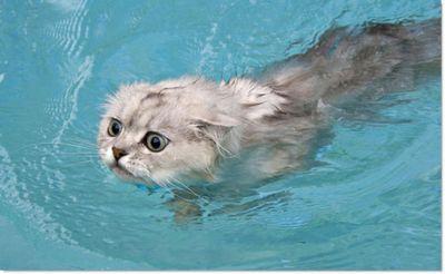 泳ぐ猫06