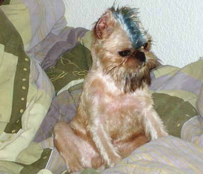 カラフルに染められた犬10