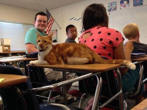 毎日高校に通う猫02