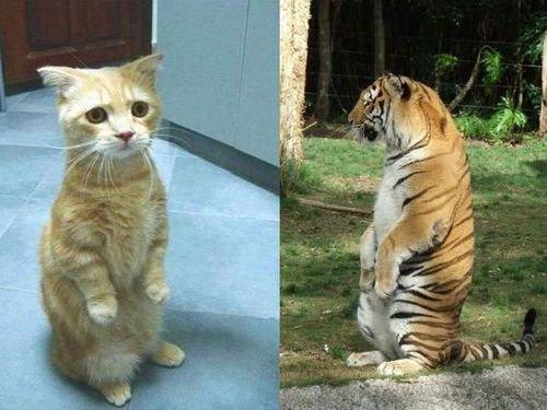 前世は別の動物だったであろう猫00