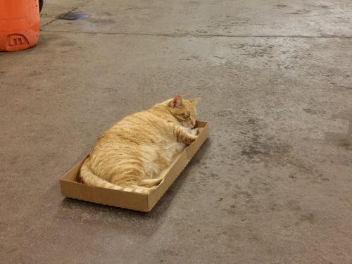 猫とトラップ03