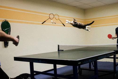 04跳ぶ・飛ぶ動物たち
