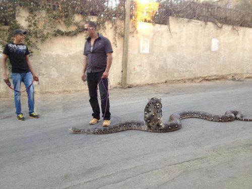 ヘビの散歩02