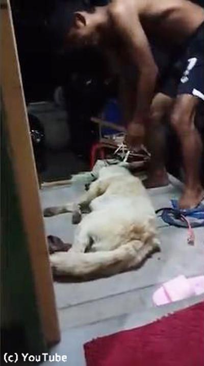 お風呂を断固拒否する犬04