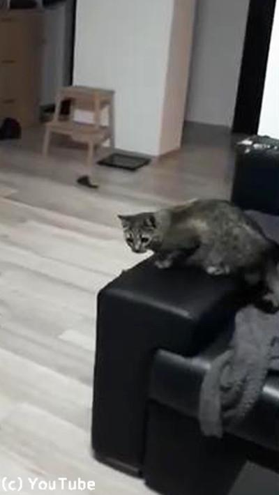 キャッチボール上手な猫01
