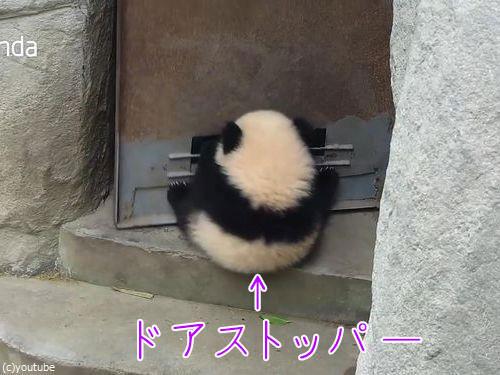ドアストッパーな赤ちゃんパンダ00
