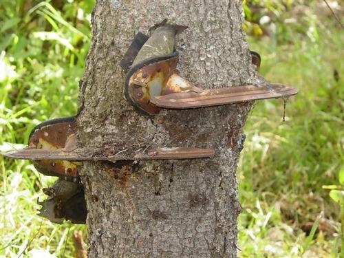 スケート靴の木01