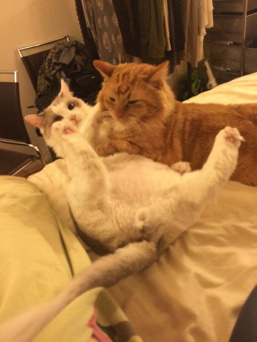 彼氏の猫と私の猫03
