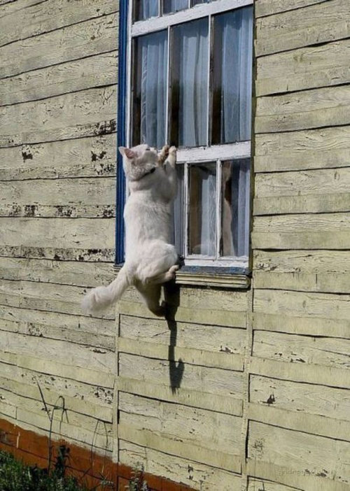 動物「おうちに入れてー!」10