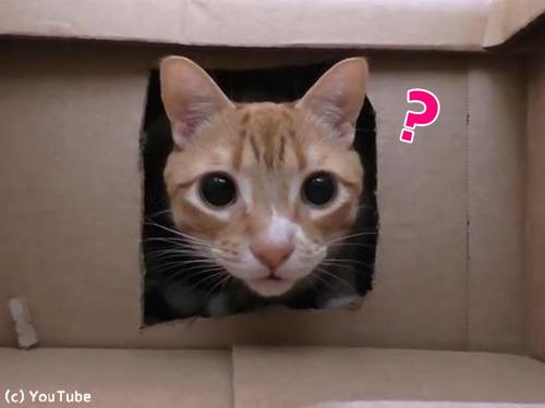 猫2匹にダンボール迷路をプレゼント00