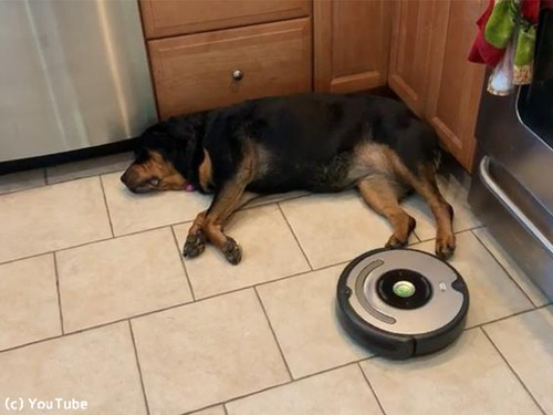 部屋の隅で寝るワンコvsロボット掃除機00