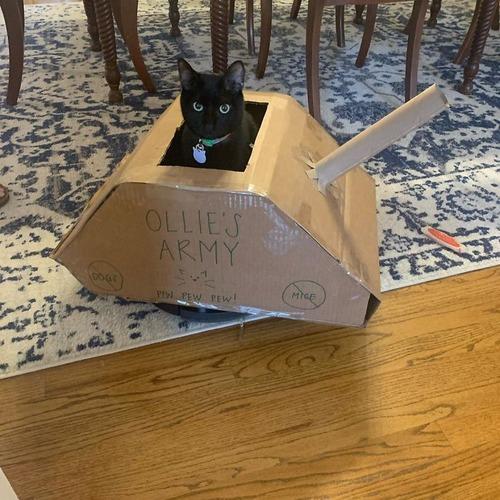 ダンボール猫戦車05