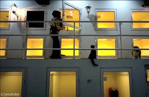 猫のための5つ星ホテル00