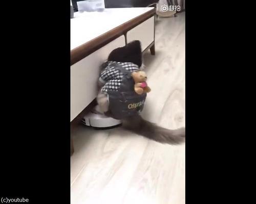 ルンバ猫にまさかのハプニング02